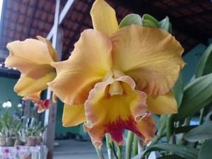 Orquidário Paraíso das Flores
